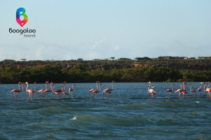 Flamingos at Punta Gallinas La Guajira Colombia Boogaloo Travel