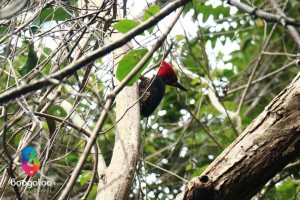 Woodpecker at Tayrona park trek Colombia Boogaloo Travel