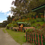 cocora-velley-hike-coffee-region