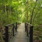 tayrona-park-the-caribbean-coast