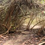 trek-tayrona-park-the-caribbean-coast